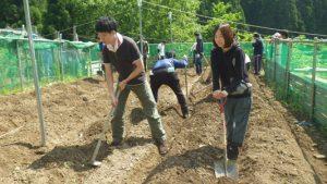 頑張るな~(管理人)美味しいサツマイモの収穫=良い土を作る、汗を流す、当然のことです。でも、服と靴は汚しません。(゜ロ゜)